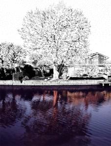 Lagoon Lone Tree